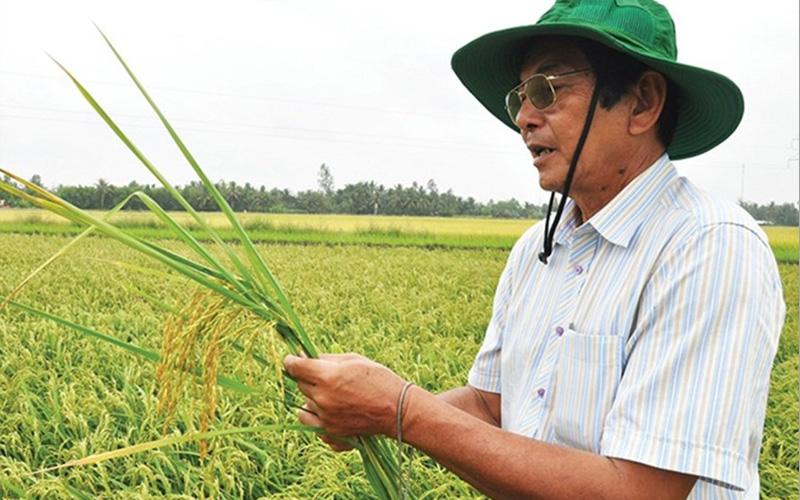 Cha đẻ gạo ST25: Ông Hồ Quang Cua